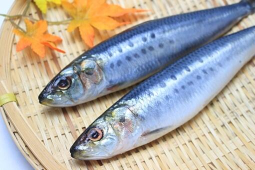 受験生が食事中に摂取すべき栄養『DHA・EPA』